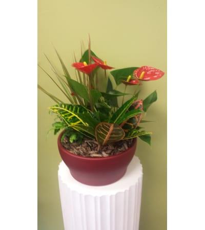 Large Anthurium Planter