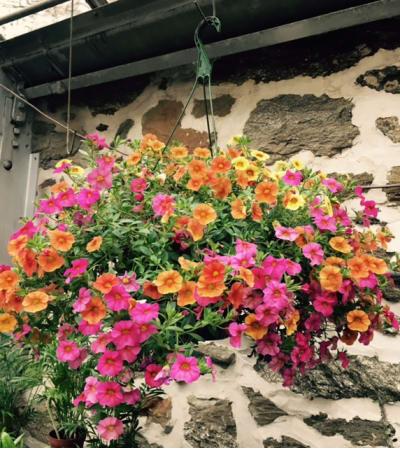 Blooming Hanging Basket