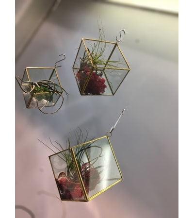 Gold terrarium with a large Air Plant