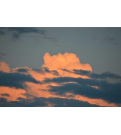 Head in the Clouds Arrangement