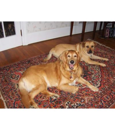 Dog Lovers Arrangement