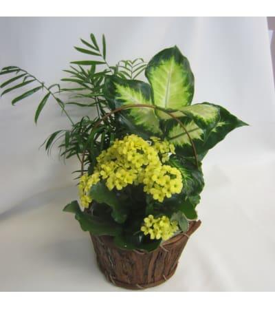 Tropical Planter Basket