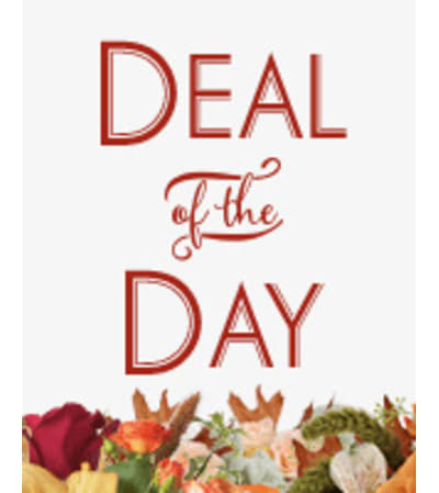 """DESIGNER""""S CREATION - DEAL OF THE DAY"""