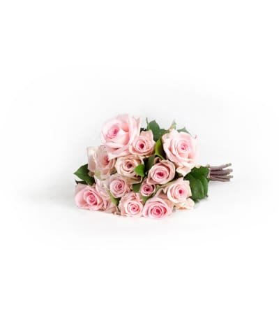 12 Wrapped Classic Pink Roses