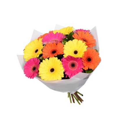 SPECIAL! 35% OFF 12 Wrapped Mini Gerberas