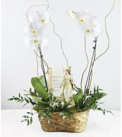 Memorial Orchid Planter Basket