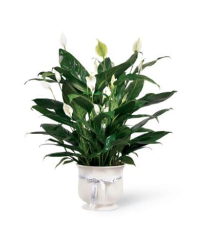 FTD® Comfort Planter