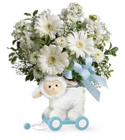 Mary Had a Little Lamb Boy