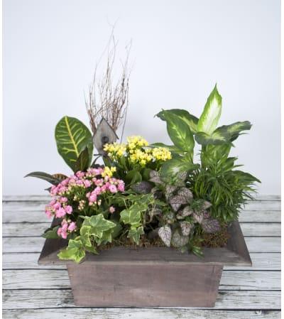 Boxed Indoor Garden