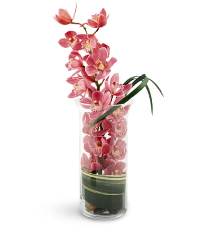 Peaceful Pink Orchids