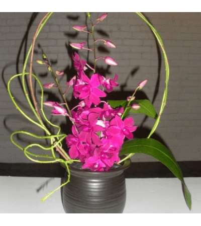Orchid Stems