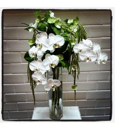 Orchid Flourish