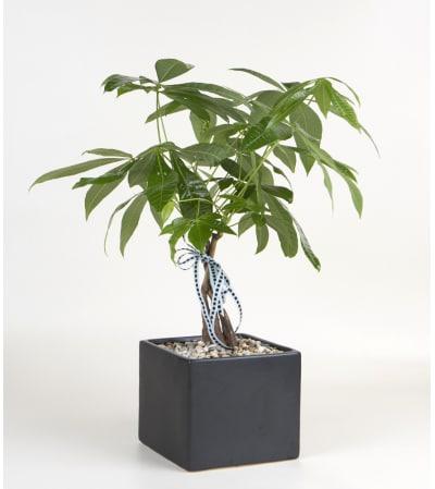 Decorative Money Tree
