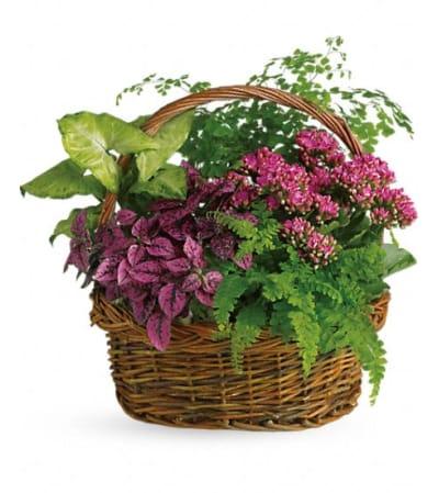Secret Garden Basket TF