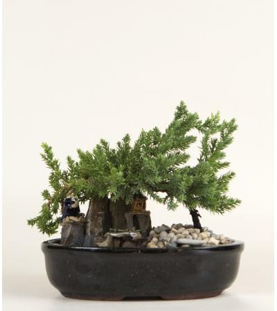Decorative Bonsai Plant