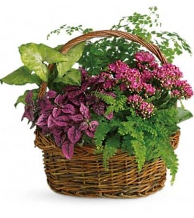 Mixed Dish Garden Basket