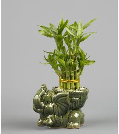 Decorative Elephant Bamboo