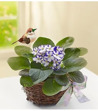 Violet Plant in Birds Nest