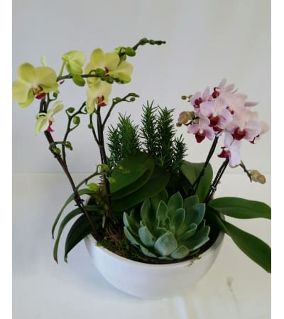 Orchid Planter #2