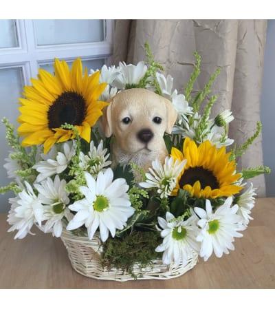 Golden Days Puppy Basket