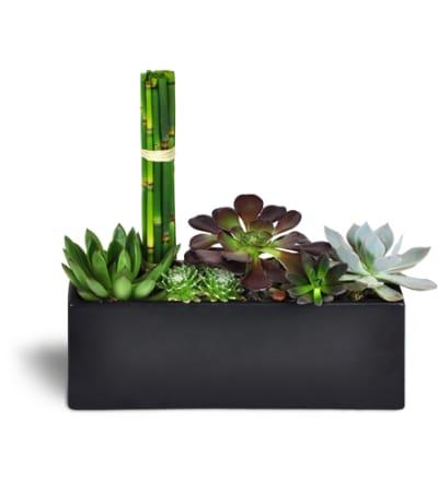 Succulent Zen Oasis™