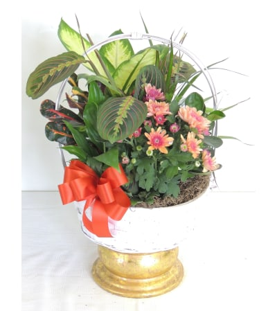 Bloom and Green Basket Dishgarden