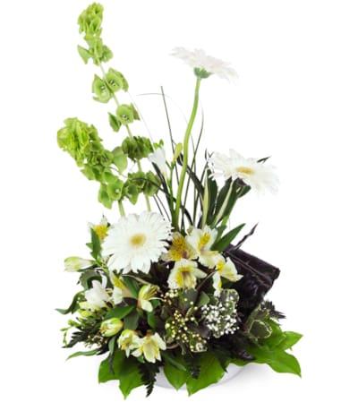 Gerbera Daisy Remembrance™