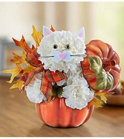 Fabulous Fall Feline