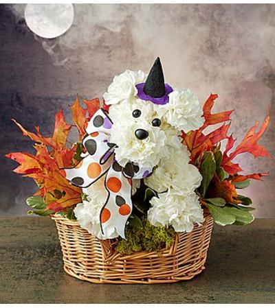 Halloween Pooch!