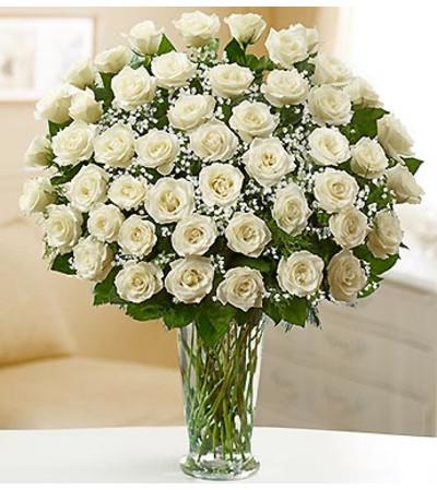 Four Dozen White Roses