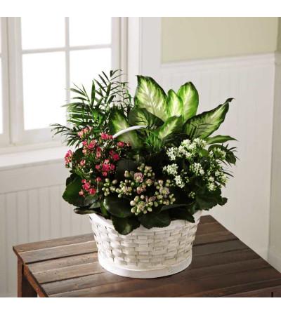 The FTD® Rural Beauty™ Dish Garden
