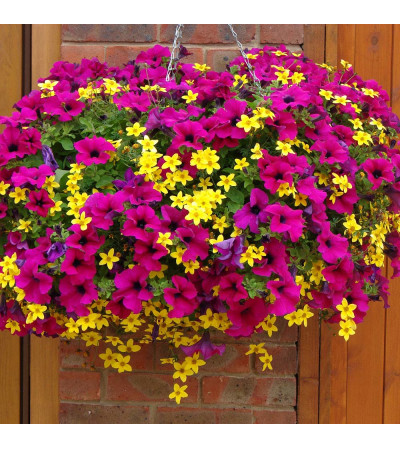 """10"""" Mixed Hanging Annual Basket"""
