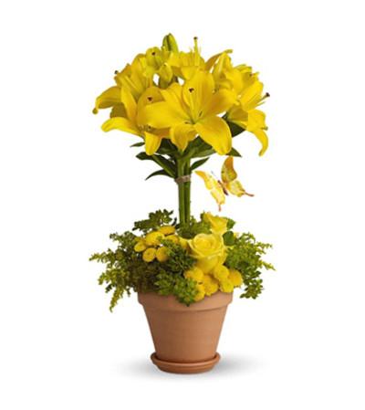 Yellow Topiary
