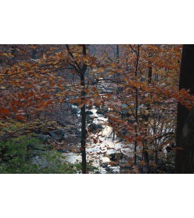 Wooded Creek Lovers Arrangement
