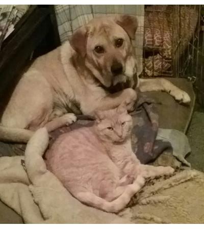 Custom Arrangement for Animal Lovers