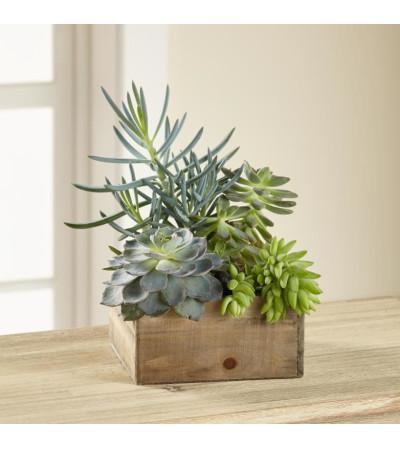 Succulents in a box 2