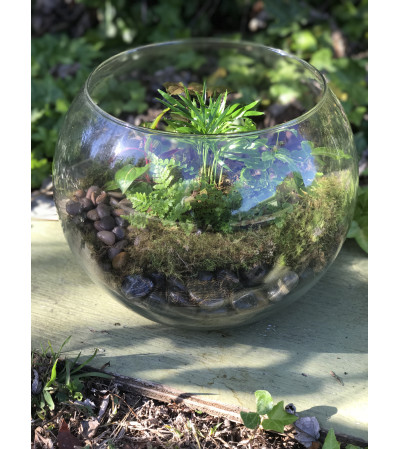 Ellingtons Bubble Bowl Terrarium
