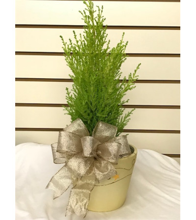 A Lemon Cypress Christmas