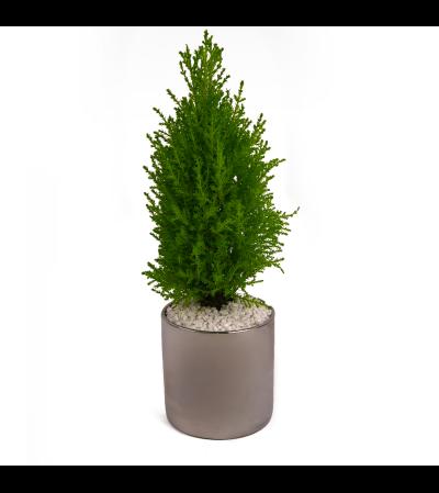 Silver Mini Tree