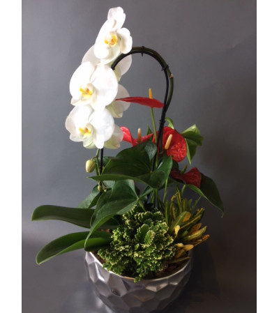 WR Orchid planter