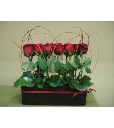 Modern Love Roses