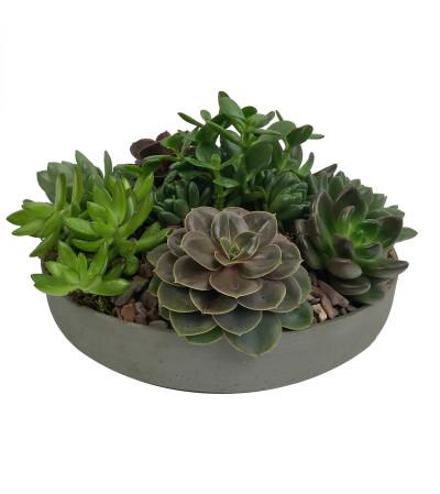 Low Succulent Garden