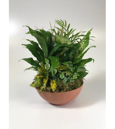 Lush Garden Of Green Plants