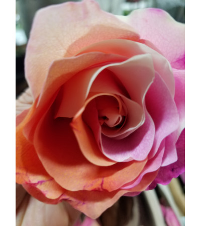 VDAY RAINBOW ROSE BOUQUET