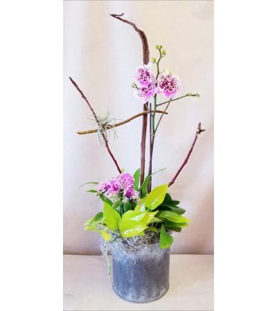 Garden of Orchids