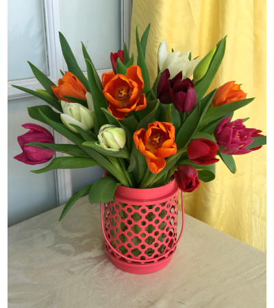 Assorted Tulips in Pink Lantern