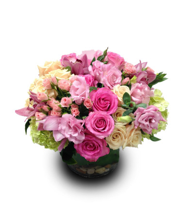 Rosy Embrace DW