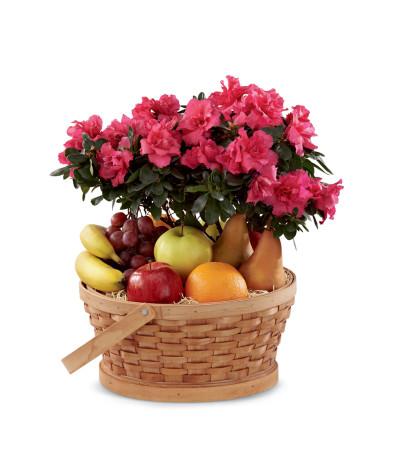 The FTD® Encircling Grace™ Fruit & Plant