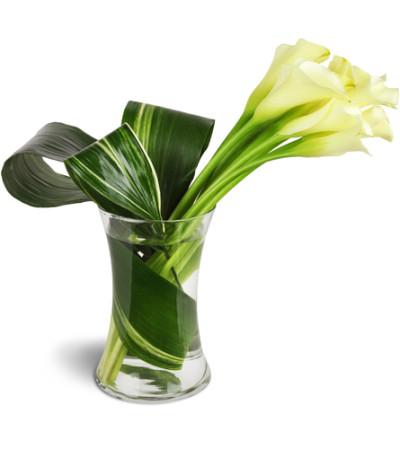 Classic Elegance Calla Vase™