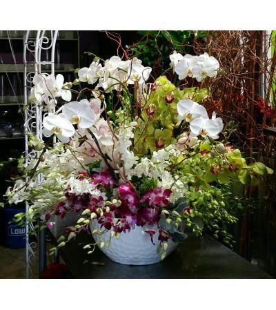 Magnificent Orchids #2